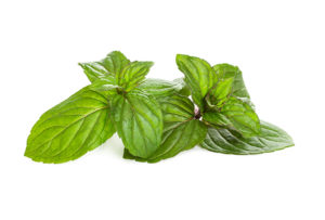 Peppermint ingredient